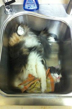 """CATS: In the sink ready to do the dishes. 17 Cats Who Know That The Sink REALLY Belongs To Them  http://www.refinery29.com/the-dodo/135#slide-16  """"It's more comfortable than it looks."""""""
