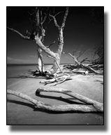 Cayo Costa Island ..Clyde Butcher Photograph