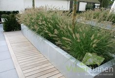 Design of a contemporary garden In this garden sleek and stylish materials meet.