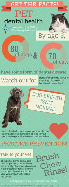 It's Pet Dental Health Month. Get the facts you need to keep your pet's mouth healthy and clean!