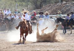 Charreria #Charros #Coleadero