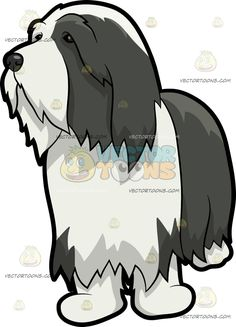 A Wondering Bearded Collie Dog :  A dog with dark gray and white long fur black nose looking curious while observing its surrounding  The post A Wondering Bearded Collie Dog appeared first on VectorToons.com.  #clipart #vector #cartoon