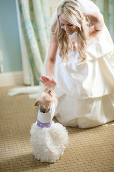 Avera Wang Dress Groom In A Tux And Poodle To Boot Adorbs Photo