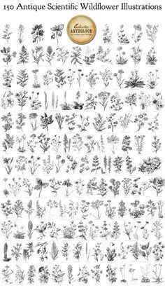 150 Antique Scientific Wildflowers Illustrations – Vectors Brushes and… Bouquet Tattoo, Wildflower Tattoo, Vector Brush, Plant Tattoo, Garden Illustration, Botanical Illustration, Floral Sleeve, Flower Tattoos, Black Tattoos