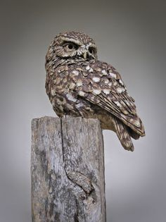 Little Owl, Simon Griffiths. Stoneware sculptures