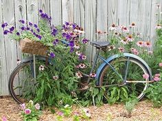 garden bike - the way they should look..abandoned and entwined in rambling serendipity