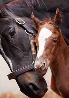 The iconic first image of Zenyatta and her second foal, born on April 1, 2013.