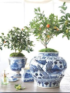 No need to go out and look for planters -- try using beautiful ceramics you already own for an extra-special touch for small potted indoor citrus plants. Shop more of our favorite Chinoiserie ginger jars here! Home Modern, Chinoiserie Chic, Blue And White China, White Rooms, Ginger Jars, White Decor, Beautiful Space, White Porcelain, Decoration