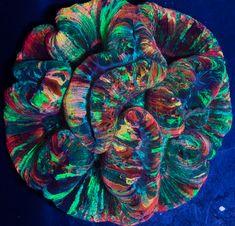 Rainbow Wellsophyllia Coral