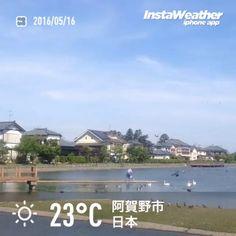 おはようございます! 瓢湖は静かな佇まいでした〜♪