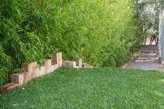 # development rnrnSource by PApaysagiste Bamboo Hedge, Bamboo Grass, Grass Edging, Hedges, Wood, Outdoor, Gardens, Garden Design, Landscape Planner