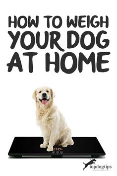 Whether your dog needs to lose/gain weight or you're curious about how much he weighs, you can learn how to weigh your dog at home. Dog Weight, Weight Gain, Dog Health Tips, Basic Math, Home Learning, Dogs, Elementary Math, Common Core Math, Pet Dogs