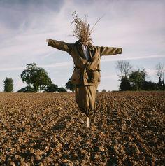 Espantapájaros, Agricultura, ganadería, Field, la producción de alimentos, crecimiento, semillas, protección, Sentinel - foto de stock