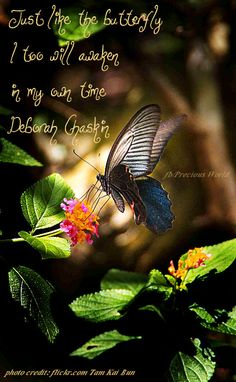 Just like the butterfly I too will awaken in my own time. ~ Deborah Chaskin - Spangle Butterfly - Papilio Protenor