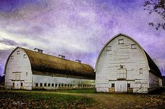 This is the second rendition of a photo I made of the two large barns at the Nisqually Wildlife Refuge near Tumwater, Washington. I enjoyed the architecture of these two old barns and the perspective their size gives. It is a beautiful area and was a real treat to take photographs there.