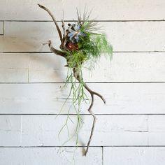 Palacea Giant Tillandsia in Gardening NURSERY Plants at Terrain