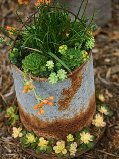 SUCCULENT: Rustic Chicken Feeder-Whether the chickens are gone or you have a special place in your heart for all things galvanized, repurposing an old feeder could be the best way to add a conversation piece to your garden. Rustic Gardens, Unique Gardens, Outdoor Gardens, Container Flowers, Container Plants, Container Gardening, Succulent Containers, Succulent Planters, Vegetable Gardening