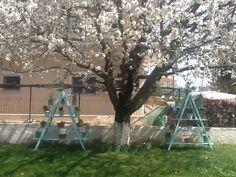Η κερασιά μου και οι ανθοστήλες στην αυλή μου(Δήμητρα Μπούκλα)