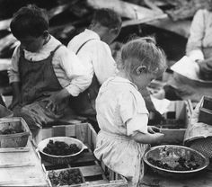 3 year old hulling berries at a canning company, Delaware 1910