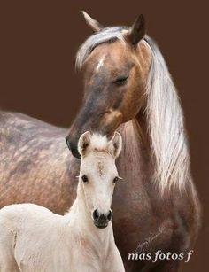 Los Animales Mas Tiernos-caballo y cria