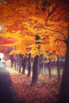 Fall Photography autum photo yellow crimson red mustard leaves country lane the way back home for the holidays - Nature Photography Lightroom, Photoshop, Fall Is Here, Autumn Photography, Amazing Photography, Fall Photos, Pretty Pictures, Graphic, Back Home