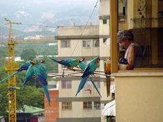 Esto es lo más bonito que he visto hoy, la foto fue tomada en Caracas.