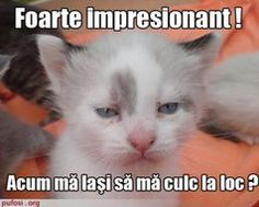 Animal Humor Photo: Smudgy Is Thrilled Beyond Words. Funny Cat Memes, Funny Cats, Funny Animals, Cute Animals, Hilarious, It's Funny, Humorous Cats, Baby Animals, Word Pictures