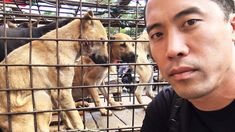 This Guy Rescues Dogs From Torture And Slaughter In Asia