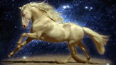 horse hd widescreen wallpapers for laptop