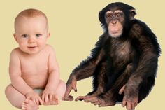 Human Babies Rely on Primitive Reflexes to Learn Language. Learning a language requires primitive brain areas to be rewired and fine tuned.