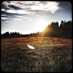 Moor around Kirchsee. I love the colours. #soultravels #outdoorgirl #adventuregirl #mindful #munichandthemountains