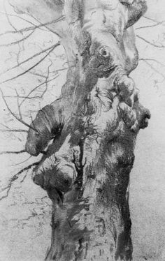 Adolf Menzel. 'Study of a Tree'. Charcoal on paper. 1875 - 80.
