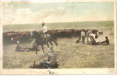 1915 Cattle BRANDING Cowboys DENVER Colorado WESTERN SCENE Postcard Detroit Pub.