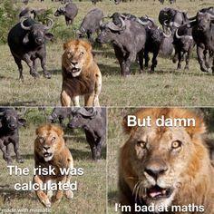 Memes Humor, Really Funny Memes, Stupid Memes, Stupid Funny Memes, Funny Relatable Memes, True Memes, Humor Humour, Animal Jokes, Funny Animal Memes