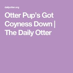 Otter Pup's Got Coyness Down   The Daily Otter