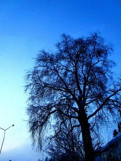 Travelling with camera obscura: Winter Wonderland 3: Lappland Suomi Sverige