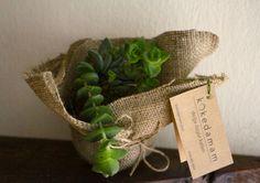 Succulent kokedama gift #succulent #green #art #kokedama #design #handmade #gardening #flower #nature #shop #gift