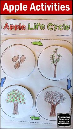 Your students will love this simple, printable, easy-to-create apple life cycle interactive notebook activity. Students will color, cut and assemble the life cycle of an apple.  In addition, there is a writing page for students to summarize the stages. Interactive notebooks are a great alternative to worksheets and minimize lesson plans.