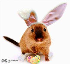 Easter Gerbil