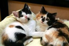 Two Beautiful Kitties.......