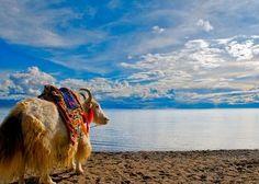 One of the Three Holy Lake in #Tibet - Namtso Lake