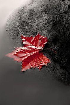Fall in color splash