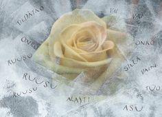 Tiedätkö onko ruusu alasti Pablo Neruda
