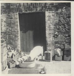 A child in a bath with a pig, another great shot! outside irish cottage