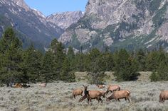 21. Grand Teton National Park, Wyoming #camping #hiking #parks http://greatist.com/fitness/best-camping-united-states