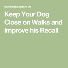 Keep Your Dog Close on Walks and Improve his Recall