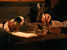 """It's raining dogs and more dogs. Nowadays you can't go anywhere without seeing someone toting a pocketbook full of furry cuteness and restaurants are no exception. In fact, some would say it's become a new dining trend, grabbing some grub with your canine pal. So we've put together a list of the absolute top pet-friendly places for you and your """"best friend"""" to go.This list is really going to the dogs, and we love it!"""