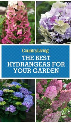 Get More Hydrangea Flowers Add elegance, charm, and nostalgia to any garden with these gorgeous flowering hydrangea shrubs.Add elegance, charm, and nostalgia to any garden with these gorgeous flowering hydrangea shrubs. Hydrangea Shrub, Hydrangea Care, Hydrangea Flower, Hydrangea Colors, Garden Shrubs, Lawn And Garden, Garden Plants, Types Of Hydrangeas, Flowering Bushes