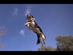 Video - Epic Parkour Dog