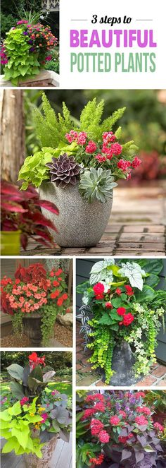 Secret to Gorgeous Plant Pots (The Forever Home Project Great tips for making stunning potted plant arrangements - can't wait to add some color to my deck!Great tips for making stunning potted plant arrangements - can't wait to add some color to my deck! Outdoor Plants, Outdoor Gardens, Potted Plants Patio, Plants For Porch, Planters For Front Porch, Outdoor Spaces, Front Porch Flowers, Courtyard Gardens, Container Gardening
